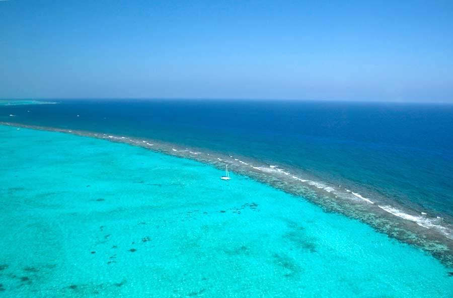Baia de corais, Ilhas Cayman, crédito - Dave Taylor