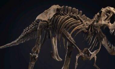 Quer comprar um dinossauro? Esqueleto de T-Rex será leiloado por mais de R$ 32 milhões