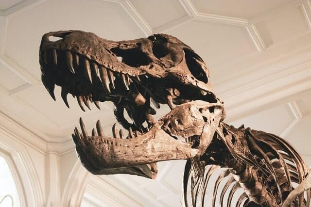Fóssil de T-Rex é vendido por US$ 31,8 milhões