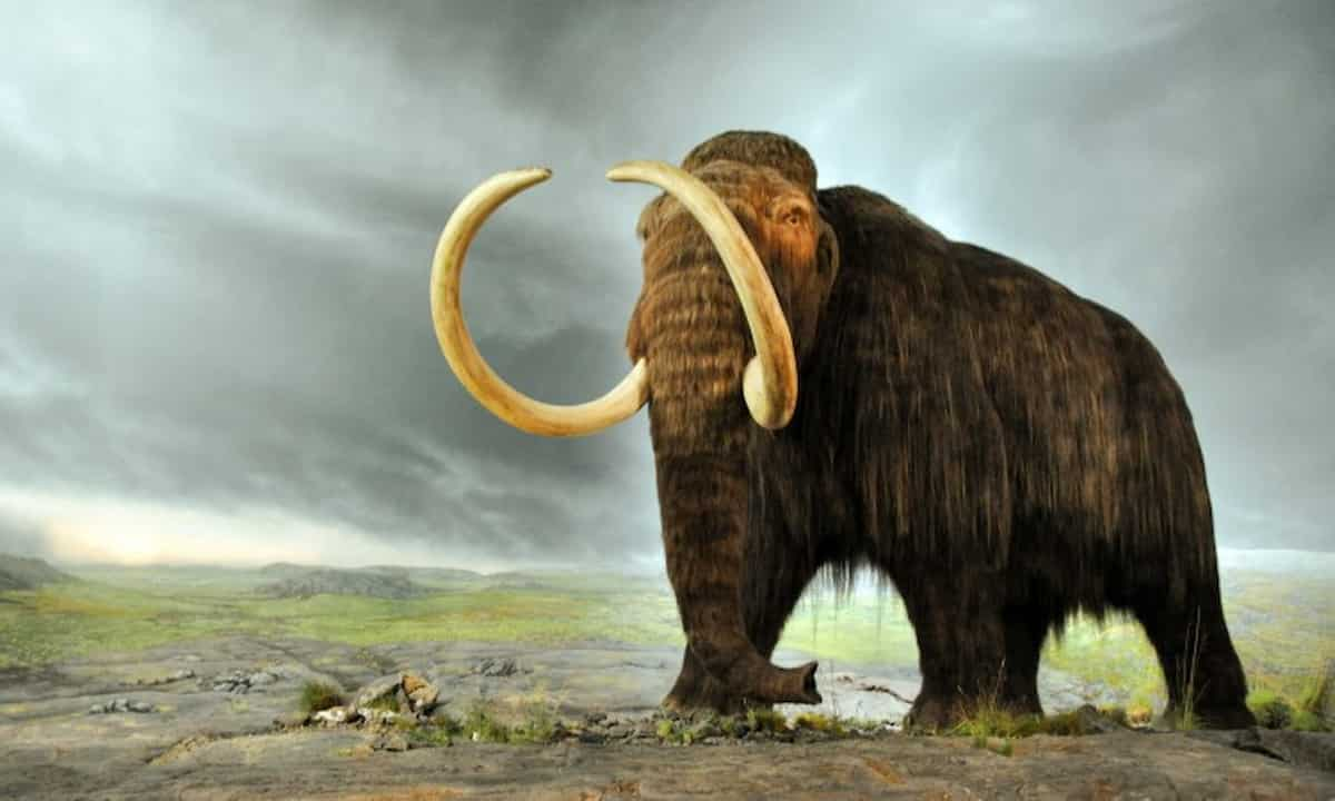 Imagem ilustrativa de um mamute. Crédito: Woolly Mammoth   Royal BC Museum and Archives